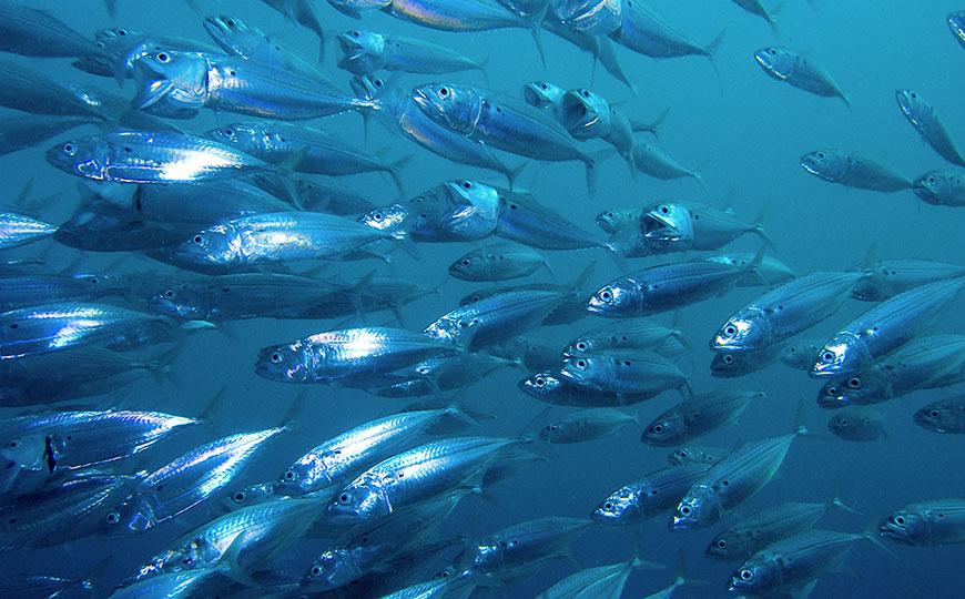 魚油DHA30-TG
